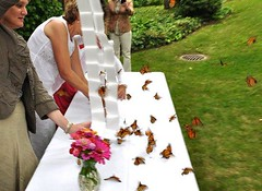Neptune Society Minneapolis, MN - Butterfly Release Celebration