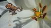 small frog on a flower (sami kuosmanen) Tags: finland forest flash funny fun flower frog suomi summer sammakko small hauska kesä kukka metsä macro luonto light lähikuva colorful creative closeup art kouvola