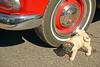 Couldn't find a hydrant (Brad Harding Photography) Tags: lawrence kansas revitup carshow dog statue peeing pug humor