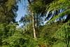 2017-08-28 cannock chase 065 (sonya.britton) Tags: cannockchase staffordshire ancientforest wood forest walk family tree