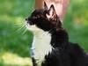 Felix Majowe Fotki Mai 2017 (arjuna_zbycho) Tags: felix blackcat tuxedo tuxedocat kater hauskatze cat animal cute animals pets gato kitten feline kitty kittens pet tier haustier katzen gattini gatto chat cats