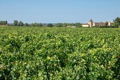 IMG_6187.jpg (Bri74) Tags: entredeuxmers france grapevine landscape