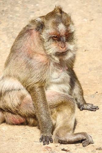 Wat Khao Takiap - Monkeys