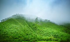 Foggy Hills (Dhina A) Tags: sony a7rii ilce7rm2 a7r2 variotessar t fe 1635mm f4 za oss sonyfe1635mmf4 sel1635z foggy misty fog mist hills munnar kerala india