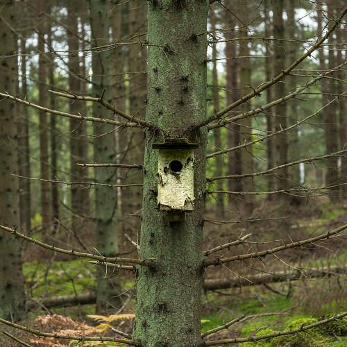 Fågelholk på spretigt träd