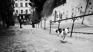 On a Mission, Montmartre, Paris, 2015