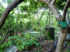 September 11th, 2017  RISC roof garden (karenblakeman) Tags: reading uk risc globalcafe londonstreet roofgarden forestgarden permaculture 2017 2017pad september berkshire