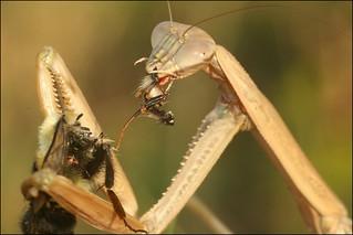 Bee-Liscous