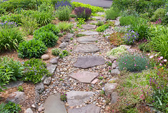 Rock garden on slope with path (oreotillymickey) Tags: campanula alpineplants blooming blooms blossoms boulders combined cultivatedplant dianthus differenttypestogether flagstones flower flowering floweringplant gardenbedsborders gardendesigning gardenuse group grow growing hardscape hillside hilly homegardendesign homelandscape homelandscaping horticulturalsubject horticulture ingarden landscaping mix mixed mixture morethanonetype path pathway perennial plant planthabit plantingcombination plantingcombinations rockgarden rocky sedum slope sloped sloping steps stockimage stockphoto stockphotograph stockphotography stockpicture stones thymus variety walk walkway