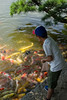 Kid feeding carps (sax.) Tags: kid carps lake okayama okayamagarden colors food