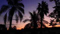 Mauve Sunrise (Jim Mullhaupt) Tags: sunrise sunup dawn sun morning sky clouds color red orange pink yellow blue tree palm silhouette weather tropical exotic wallpaper landscape bradenton florida manateecounty nikon coolpix p900 jimmullhaupt cloudsstormssunsetssunrises photo flickr geographic picture pictures camera snapshot photography nikoncoolpixp900 nikonp900 coolpixp900 purple mauve