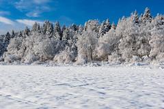 Cerknica Lake (happy.apple) Tags: otok cerknica slovenia si winter snow zima sneg slovenija cerkniškojezero cerknicalake