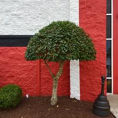 Bowling Green (sciencesque) Tags: greenville nc northcarolina bowling