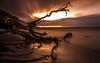 Schlafende Bäume im Sonnenuntergang (MarvinG. Fotografie) Tags: sonnenuntergang sunset langzeitbelichtung graufilter ndfilter meer baum coast clouds pentax pentaxk5 10stopfilter formatthitech