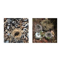 Nests (jeanne.marie.) Tags: iphone7plus iphoneography diptych birdnests nests