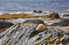 All washed up (katy1279) Tags: shell sea seascape shore nature