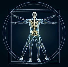 Skeleton in vitruvian (deanpetlak) Tags: anatomical anatomy art background biology body circle classic da davinci drawing famous field human humanity inscribed isolated leonardo mankind men old paper perfection proportion revival shallow skeleton square symbol texture vitruvian