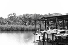 Fishpond (superzookeeper) Tags: canoneos5dmarkiv 5dmk4 5dmkiv ef2470mmf28liiusm hk hongkong namsangwai blackandwhite monochrome fishpond water pond lake farm sea river fishfarm woods eos yuenlong bnw digital favorites village