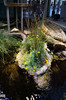 The California Academy of Sciences (lillian_bixler) Tags: san francisco california academy sciences natural history museum aquarium golden gate park planetarium