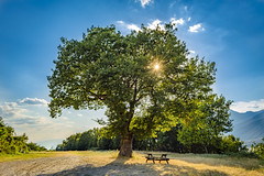 The Lonely Tree (panos_adgr) Tags: nikon d7200 archangelos monastery landscape nature sun tree sky macedoniagreece makedonia timeless macedonian macédoine mazedonien μακεδονια