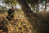 DarkShadows (Almu_Martinez_Jiménez) Tags: darkshadows sombras tenebrosas makeup johnnydepp timburton tim burton película inspiración shadows dark oscuro miedo vampiro luz humo casa abandono actor sesión shooting canon proyecto portrait luces sombra sombreado muerte morir luna oscura oscuridad festival