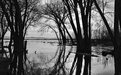 Trees in High Water (maytag97) Tags: maytag97 lake lowell blackandwhite bw outdoor high water tree sky landscape contrast nature silhouette idaho reflection nikon d750 river