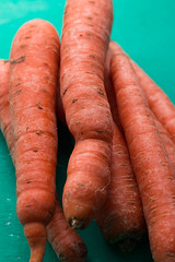 Close up of group of carrots (wuestenigel) Tags: close nature image background healthy diet vegetarian root pile ripe isolated white raw group wooden closeup nutrition agriculture vintage orange fresh green macro garden carrots vegetable colorful bunch ingredient natural heap carrot food object vitamin nobody fruit rustic organic