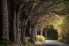 Madeira - cruising (Rafael Zenon Wagner) Tags: portugal madeira baum tree strasse road tunnel nikon d810 200mm