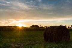 słoneczniki 2 (1 of 2) (Stach_Trach) Tags: sunset sunflower janów podlasie zachód