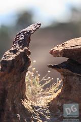 Erosion (David de Groot) Tags: brokenhill mutawintjitrip weathering erosion rock mutawintji newsouthwales australia au
