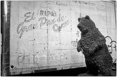 Bare Bear (Steve Lundqvist) Tags: new york usa states united america manhattan stati uniti travel trip model bw urban city ny nyc monochrome downtown monocromo big apple murales painting bear tree gardening garden fujifilm x100s art work plant bush