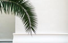 elegantly minimal (Lunor 61 (Irene Eberwein)) Tags: minimal urban minimalismus minimalist minimallove minimalperfection cleanfacade creativearchitecture architectureminimal archiminimal simplicity urbanity junglism urbanostracto archdesigne abstractart lines textures pentax liguria ireneeberwein