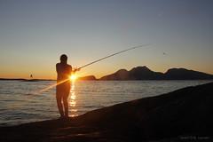 Kveldsfisker Liv (Svein Erik Larsen) Tags: fiske fishing kveld sommerkveld summer dønna helgeland nordland norge norway norvege noruega