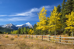 Mountain Golds (Canon Queen Rocks (1,798,000 + views)) Tags: mountains mountain mountainpeak colours clouds sky scenery scenic grass greens golds yellows bluesky nature kananaskis landscape landscapes trees fence snow snowcapped alberta canada elbowvalley momentsbycelinecom autumn fall branches leaves rockies
