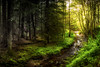 From Shadow to Light (Augmented Reality Images (Getty Contributor)) Tags: woodland shadow perthshire landscape leefilters track nature scotland countryside sunshine longexposure canon forest cloanglen light unitedkingdom gb