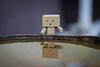 """The real man smiles in trouble, gathers strength from distress, & grows brave by reflection."" - Thomas Paine (shadman ali) Tags: danbo danboard danboardmini danbolove shadman reflection quote shadmanphotography 85mm yongnuo yongnuo85mm18 dof macro canon eos 700d t5i shadmanaliphotography canon700d canont5i shadmanali sad dhaka portrait bangladesh"