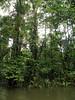 Rio Sarapiqui_46 (Thomas Jundt + CV) Tags: costarica heredia riosanjuan trinidad