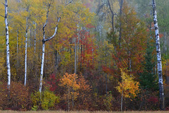 DSC_3873EnchantedForest2 (2) (Rich Mayer Photography) Tags: forest forests tree trees nature land landscape autumn fall leaves foliage wisconsin nikon