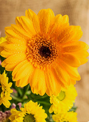 (ChicqueeCat) Tags: flower macro closeup stilllife tabletop nikon d3300 40mm nature natural light window