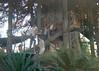 0821_09_1964_03_SwissFamilyTreehouse_Disneyland (BatFan01) Tags: disneyland themepark amusementpark swissfamilytreehouse 1960s anaheim california usa