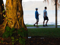 """The Cairns Esplanade-Spring • <a style=""""font-size:0.8em;"""" href=""""http://www.flickr.com/photos/146187037@N03/36929632292/"""" target=""""_blank"""">View on Flickr</a>"""