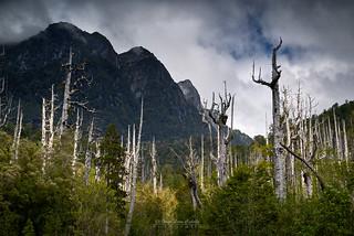 Misteriosa Patagonia - Parque Nacional Pumalin (Patagonia Chile)