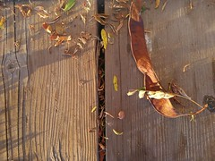 First signs of Fall... (Beeke...) Tags: light fall autumn details seeds benches littlethings herbst autunno