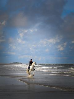 Horse on Holkham beach