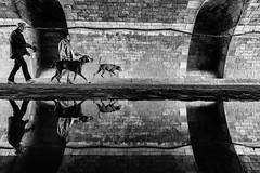 Puddle (Mustafa Selcuk) Tags: 16mm 2017 paris france fujifilm september travel xpro2 blackandwhite bnw bw siyahbeyaz monochrome monochromatic streetshooter street streetphotography streetphotographer reflections reflection