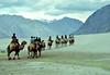 Bactrian Camel (alahlawy29) Tags: bactrian camel bactriancamel leh ladakh india جمل الهند كشمير