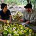 Bamboo processing