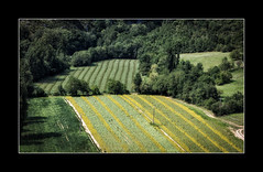 Field patterns (tkimages2011) Tags: field sunflowers pattern yellow lines geometric art graphic trees landscape aveyron gorge tarn france outdoors countryside canon 5d4 5div