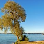Chiemsee - Blick von der Fraueninsel auf den Chiemsee (3) - Herbststimmung thumbnail