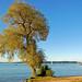 Chiemsee - Blick von der Fraueninsel auf den Chiemsee (3) - Herbststimmung